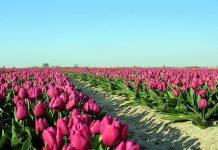 Đăng ký nhãn hiệu tại Hà Lan