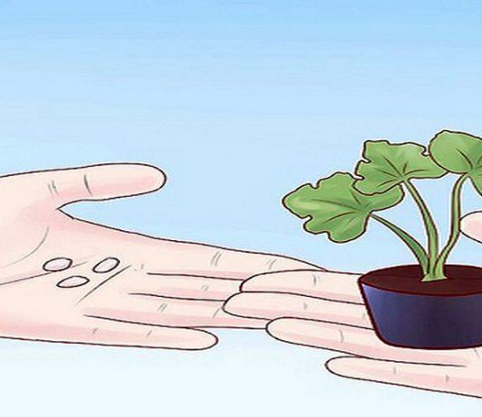 Đăng ký bảo hộ giống cây trồng